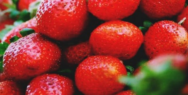 south australias first strawberries sell tray