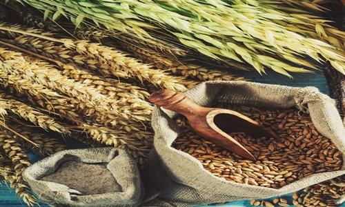UAE & Saudi Arabia to fund Indian organic & food processing industry