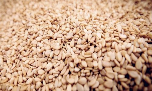 Equinom develops high-yield sesame variety using innovative technology