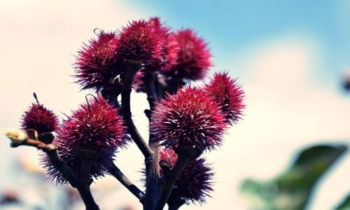 Frutarom secures organic certification for natural annatto color