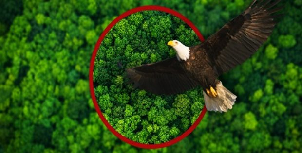 AstaPure®-EyeQ - Natural Astaxanthin inspired by the Eagle Vision
